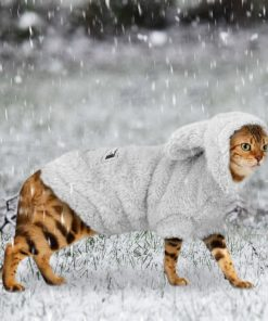 Warm Clothes for Kitten